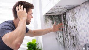 Kako Se Resiti Budji I Vlage Na Zidovima